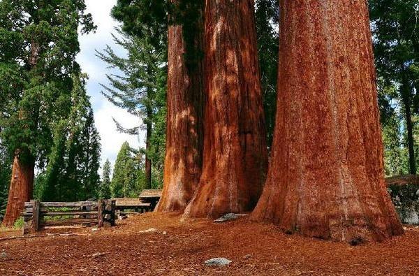 Красное дерево — материал аристократов