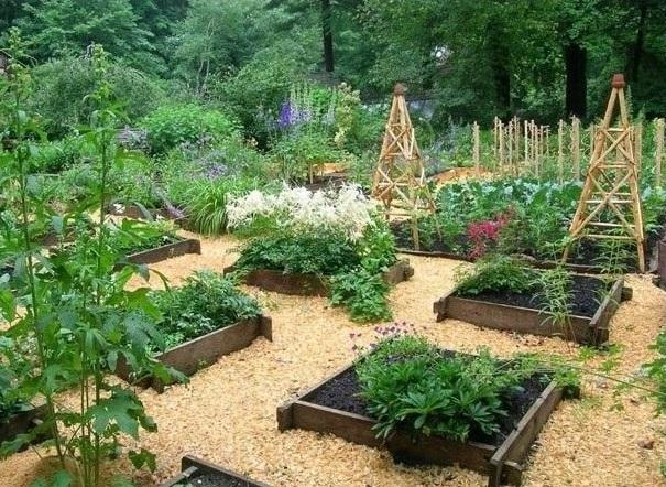 Как использовать опилки в саду и огороде - мульчирование видео