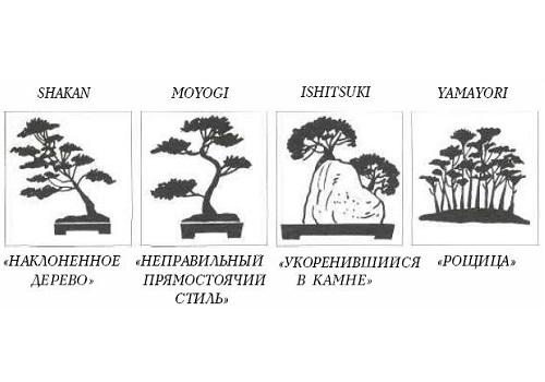 Как размножается дуб и как ухаживать за деревом на участке?
