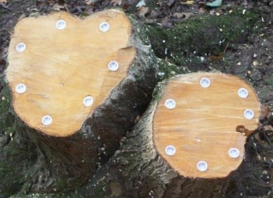 Как выкорчевать дерево и использовать пень на участке